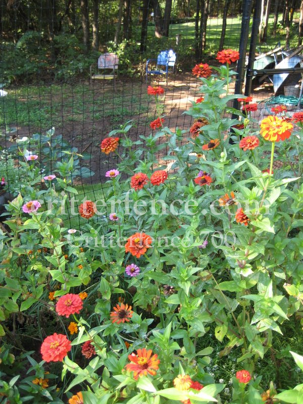 Garden fencing around flowers and plants